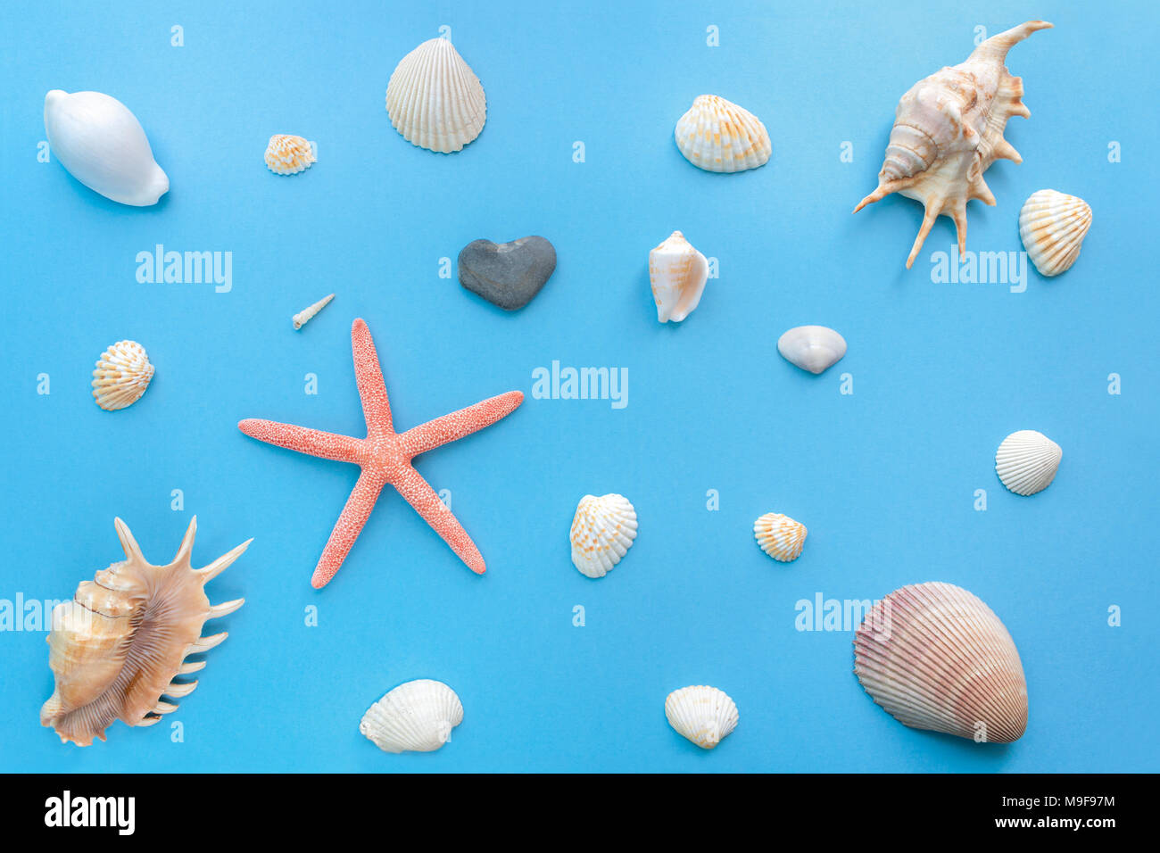Flat lay set of sea shells of different sizes on a bright pastel blue background. - Stock Image