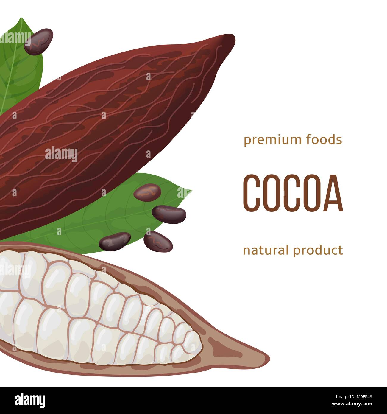 Cocoa Beans Whole Foods