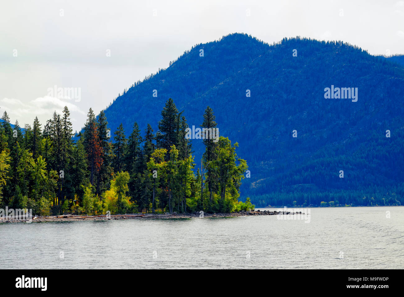 41,926.03563 conifer forest, deciduous tree fall color on narrow flat peninsula jutting out into Lake Chelan, Washington, mountains in the background - Stock Image
