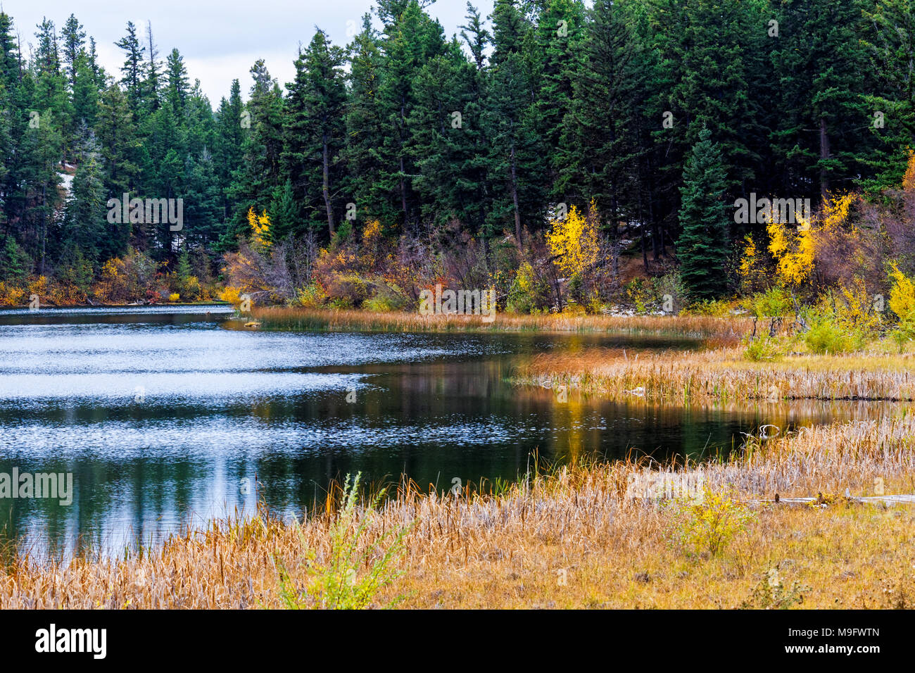 42,653.07344 Lily Lake, small pond marsh conifer forest trees, fall color - Stock Image