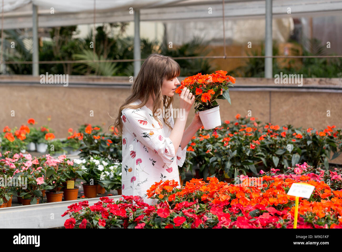 Lovely happy young woman gardener choosing flower pot with anthuriums in garden center Stock Photo