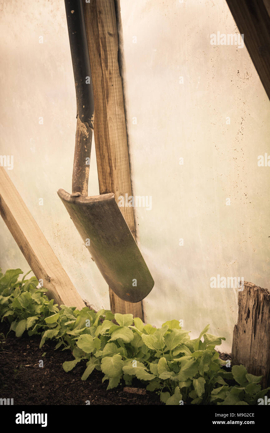 Shovel hanging in old greenhouse with green plants in it. Farmer work concept. Vintage style. - Stock Image