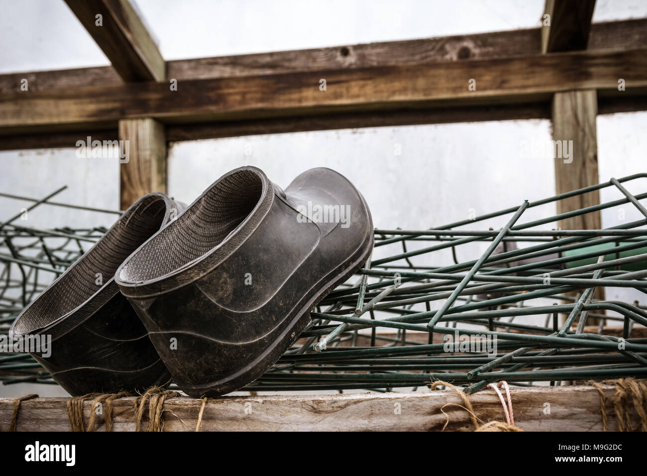 Rubber boots of a farmer lying in greenhouse. Agriculture and tough work concept. - Stock Image