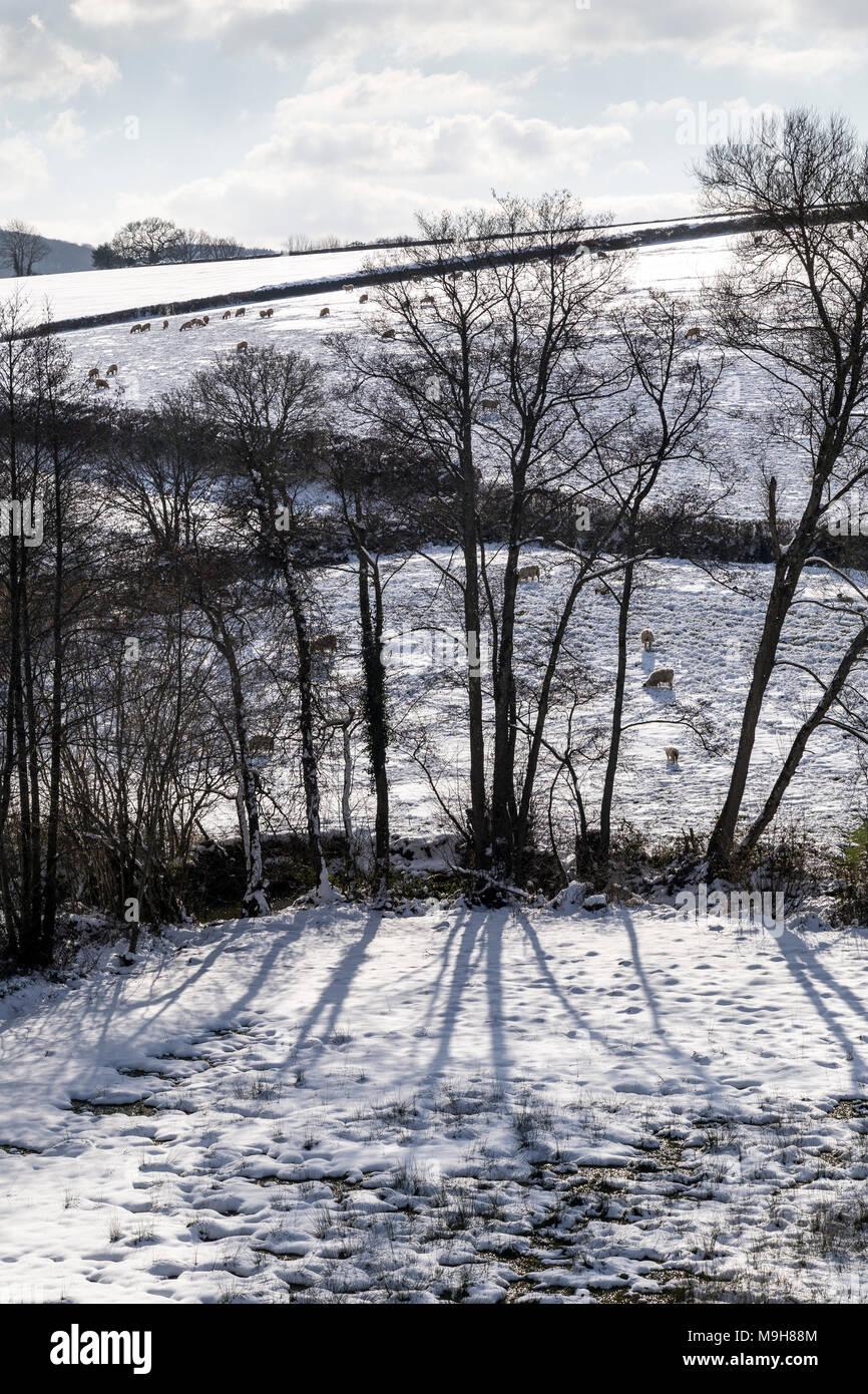 Rural business in snow near Dunsford,Dartmoor National Park,Teign Valley,Devon,edge, border, margin, side, brink, rim, lip, limit, boundary, outskirts - Stock Image