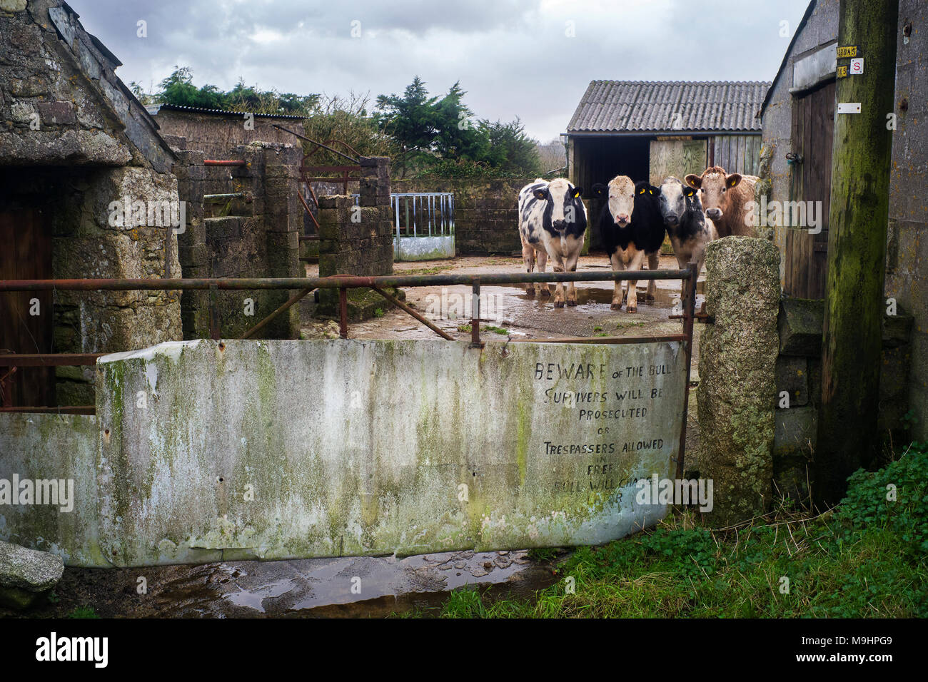 'Beware of the bull,survivers will be prosecuted or trespassers allowed in free,Bull will charge later 'farm yard sign st Breward Bodmin moor Cornwall - Stock Image
