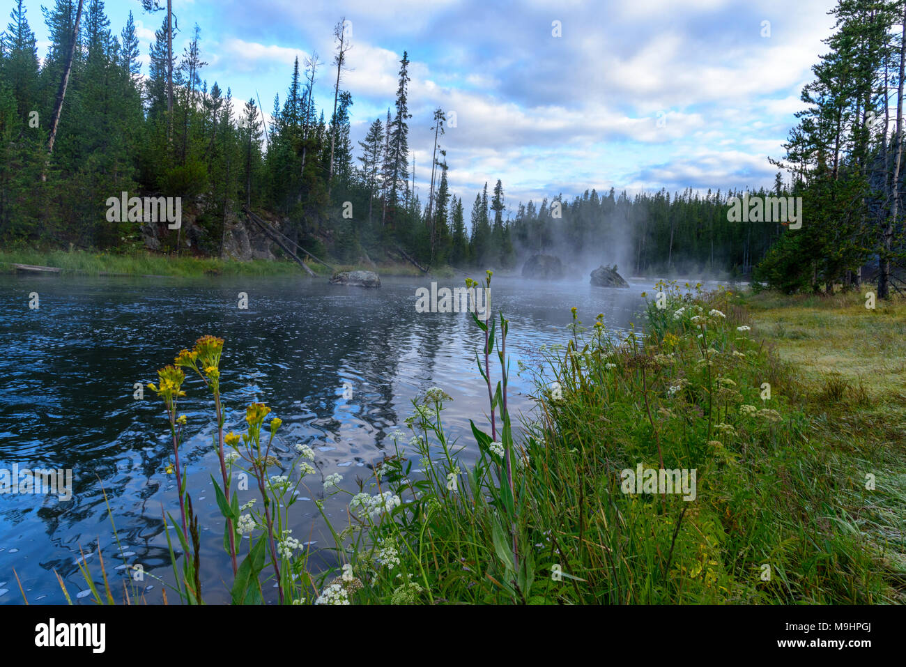 Wide angle low to ground view with flowers in foreground, slow moving river with green fields and forest under bright blue sky with white clouds. - Stock Image