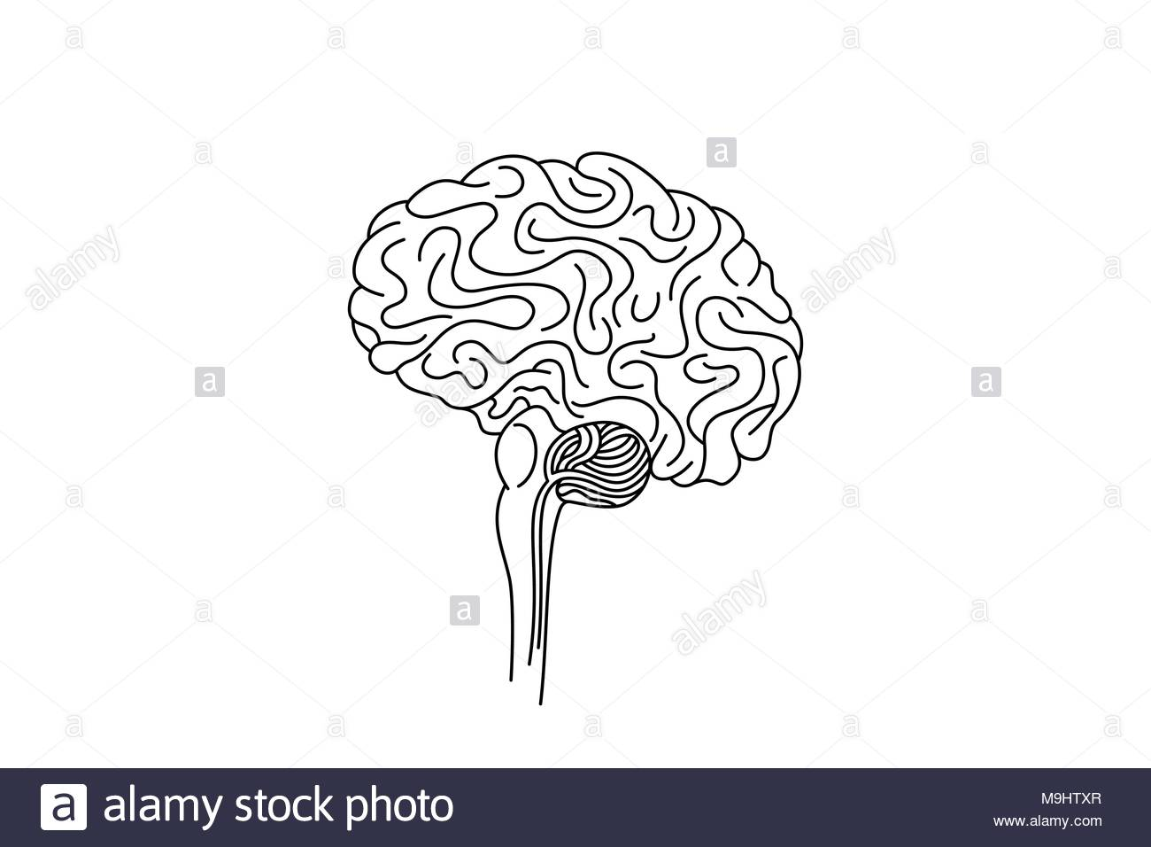 Drawing of  a brain stem, vector illustration. - Stock Image