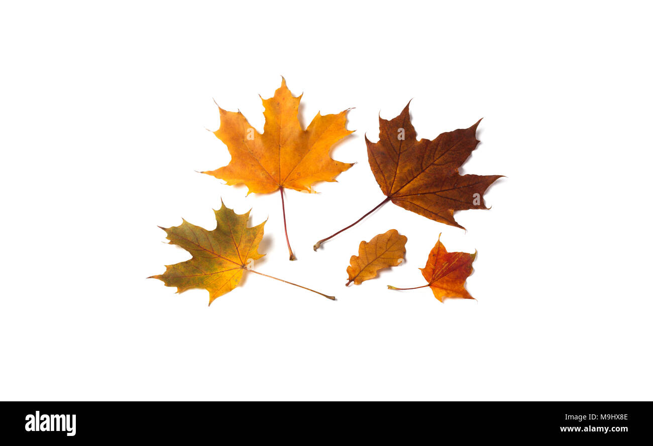 autumn leaf set on white background yellow orange brown leaves