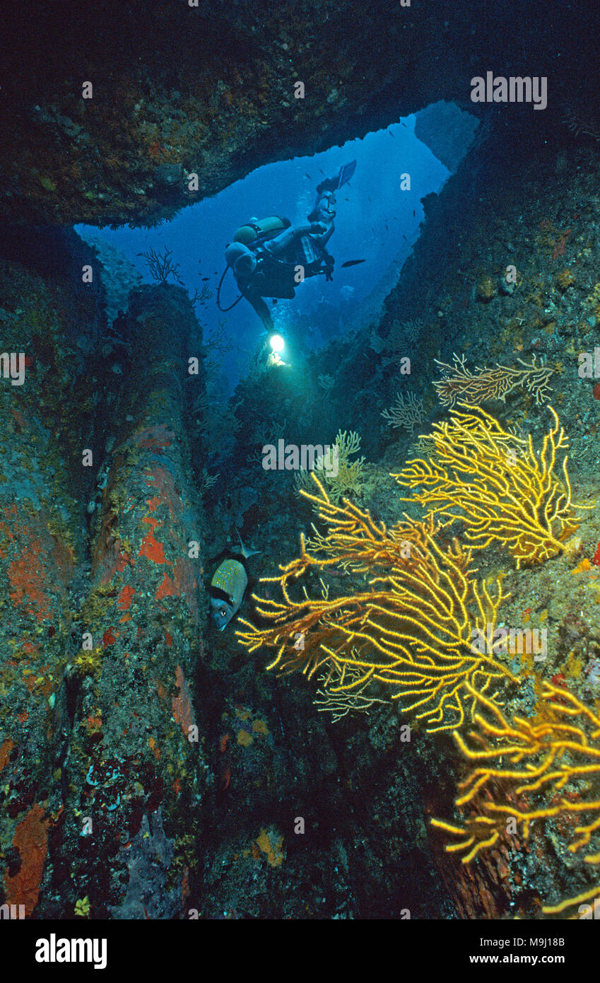 Scuba diver at a overhang with yellow Gorgonian (Eunicella cavolini), Corsica, France, Mediterranean Sea, Europe - Stock Image