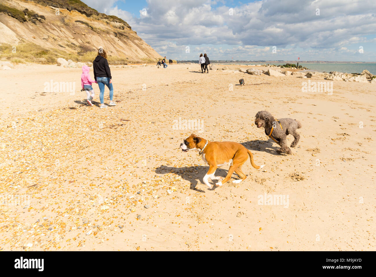 Hengistbury Head, Christchurch, Dorset, UK, 26th March 2018, Weather: Spring sunshine and blue skies on the south coast of England brings people out with their dogs for a walk along the pebble and sand beach. The headland that encloses and protects Christchurch harbour has Ancient Monument status and was declared as a Local Nature Reserve in 1990. Credit: Paul Biggins/Alamy Live News Stock Photo
