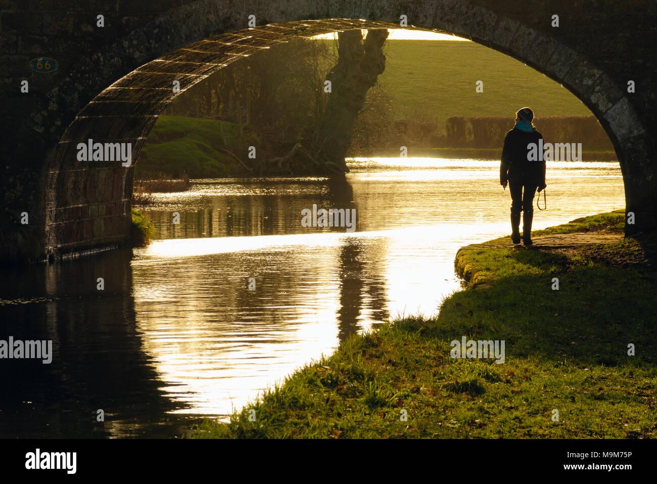 Walker under bridge 66 on the Lancaster Canal outside Garstang, Lancashire - Stock Image