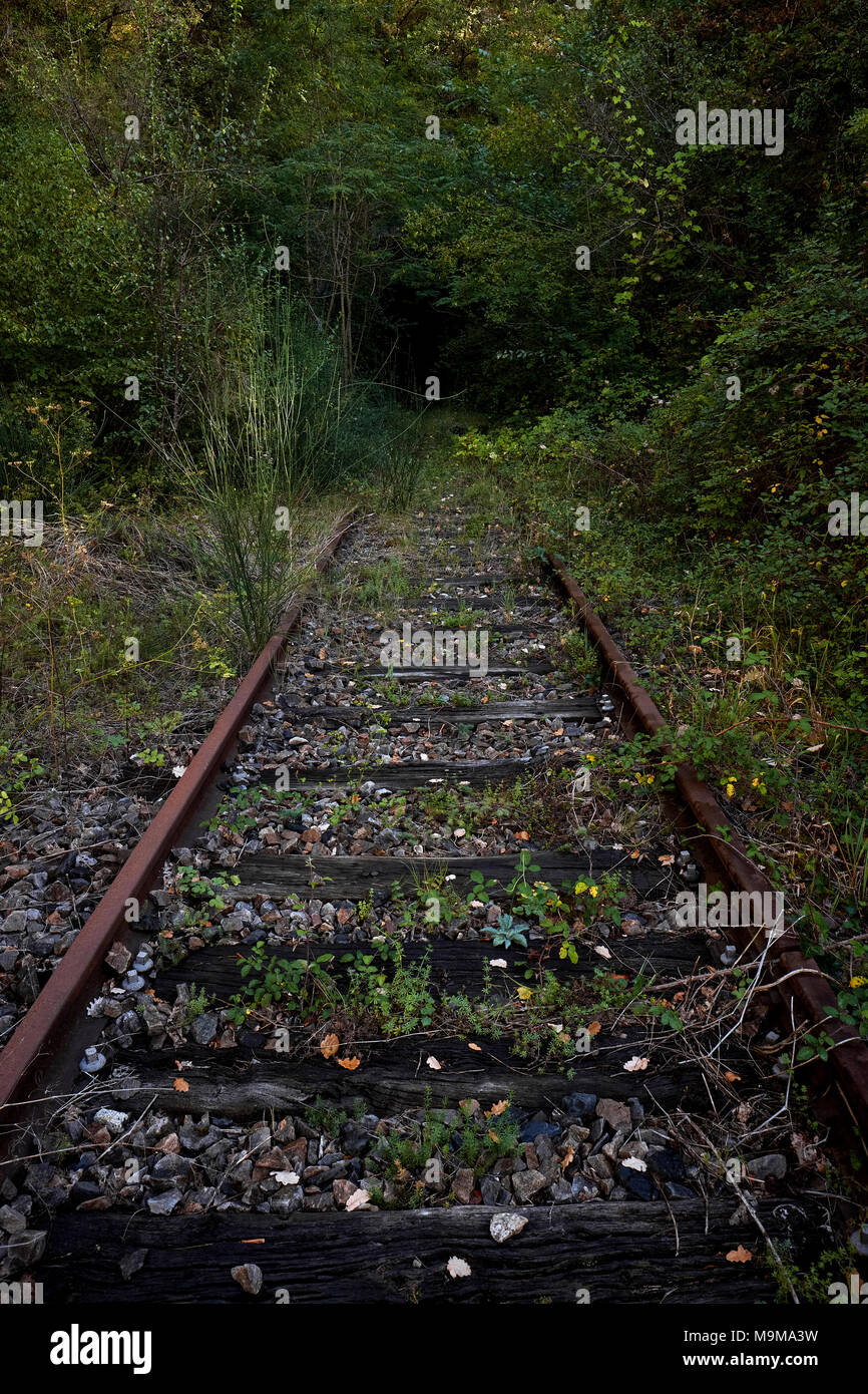 End of the line - an overgrown disused railway track Stock Photo