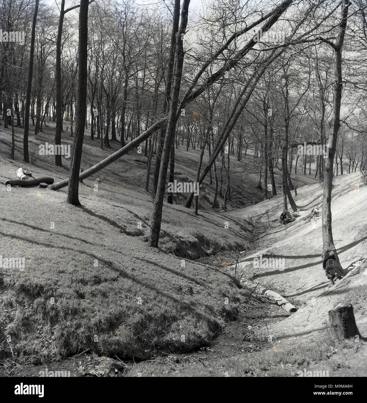 1960s, a low-level stream zig-zags through the banks of a channel or valley area in a lightly wooded forest. A body of water such as a stream plays an important 'corridor' role in connecting habitats and conserving biodiversity and are a key feature of environmental geography studies. - Stock Image