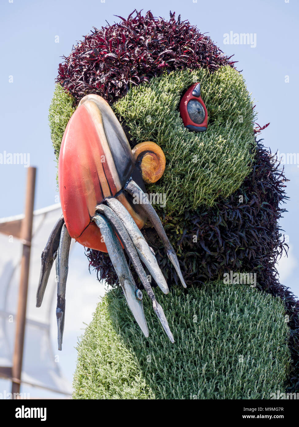 Plant sculpture of a Puffin with a beak full of fish: A huge plant-based sculpture of the a Newfoundland puffin with fish in its mouth at MosaiCanada 150. - Stock Image