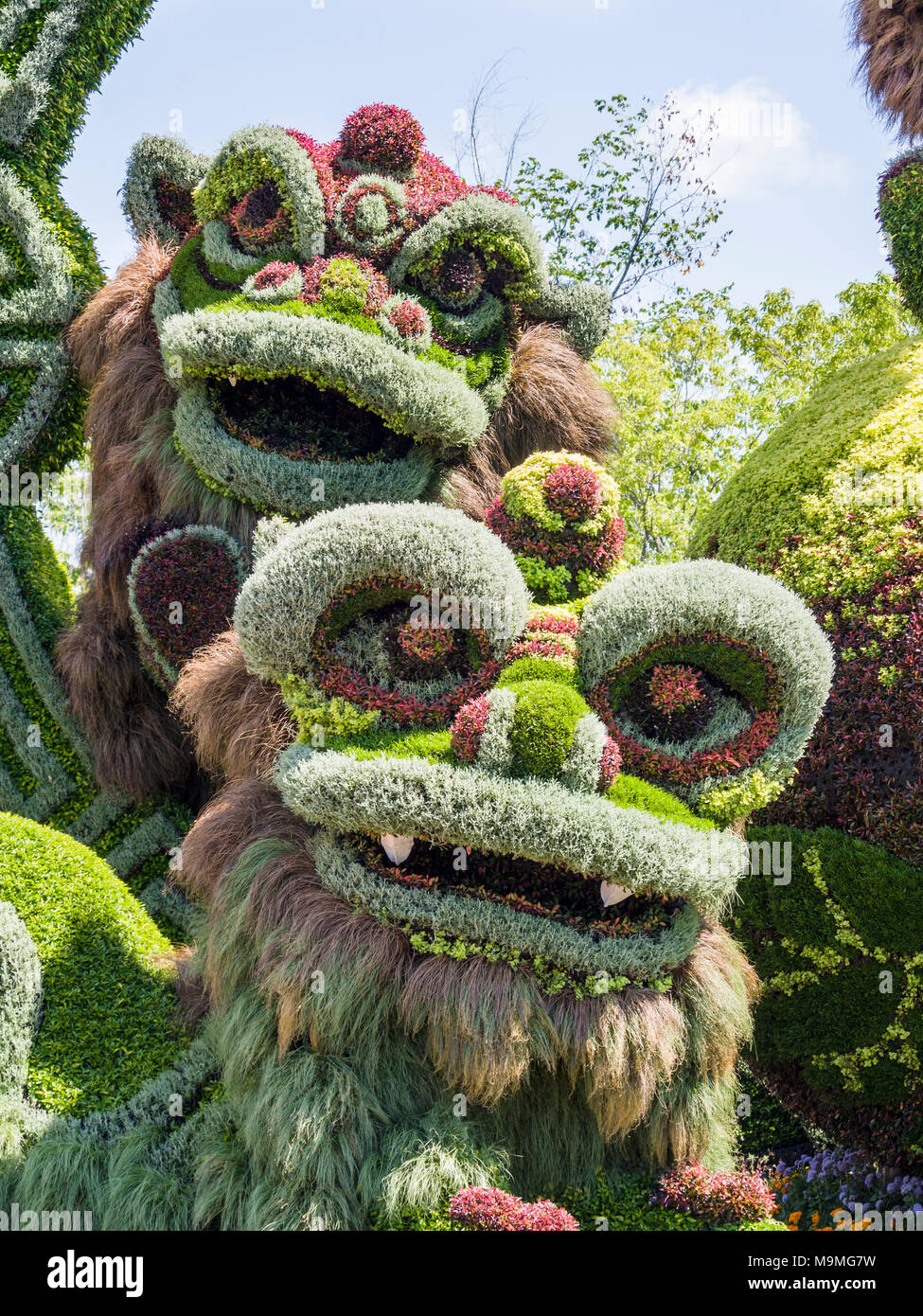 Chinese dragon heads plant sculpture: A huge plant-based sculpture of a pair of chinese mythical dragons formed from a multitude of colourful plants at MosaiCanada 150. - Stock Image