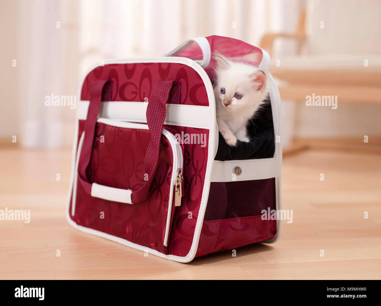 Sacred cat of Burma. Kitten (6 weeks old) in a pet carrier. Germany - Stock Image
