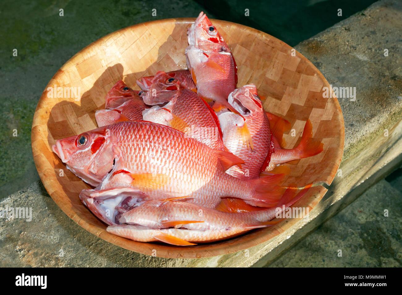 Red edible fish in a bowl, Sabre squirrelfish (Sargocentron spiniferum), Tikehau Atoll, Tuamotu Archipelago, Society Islands - Stock Image