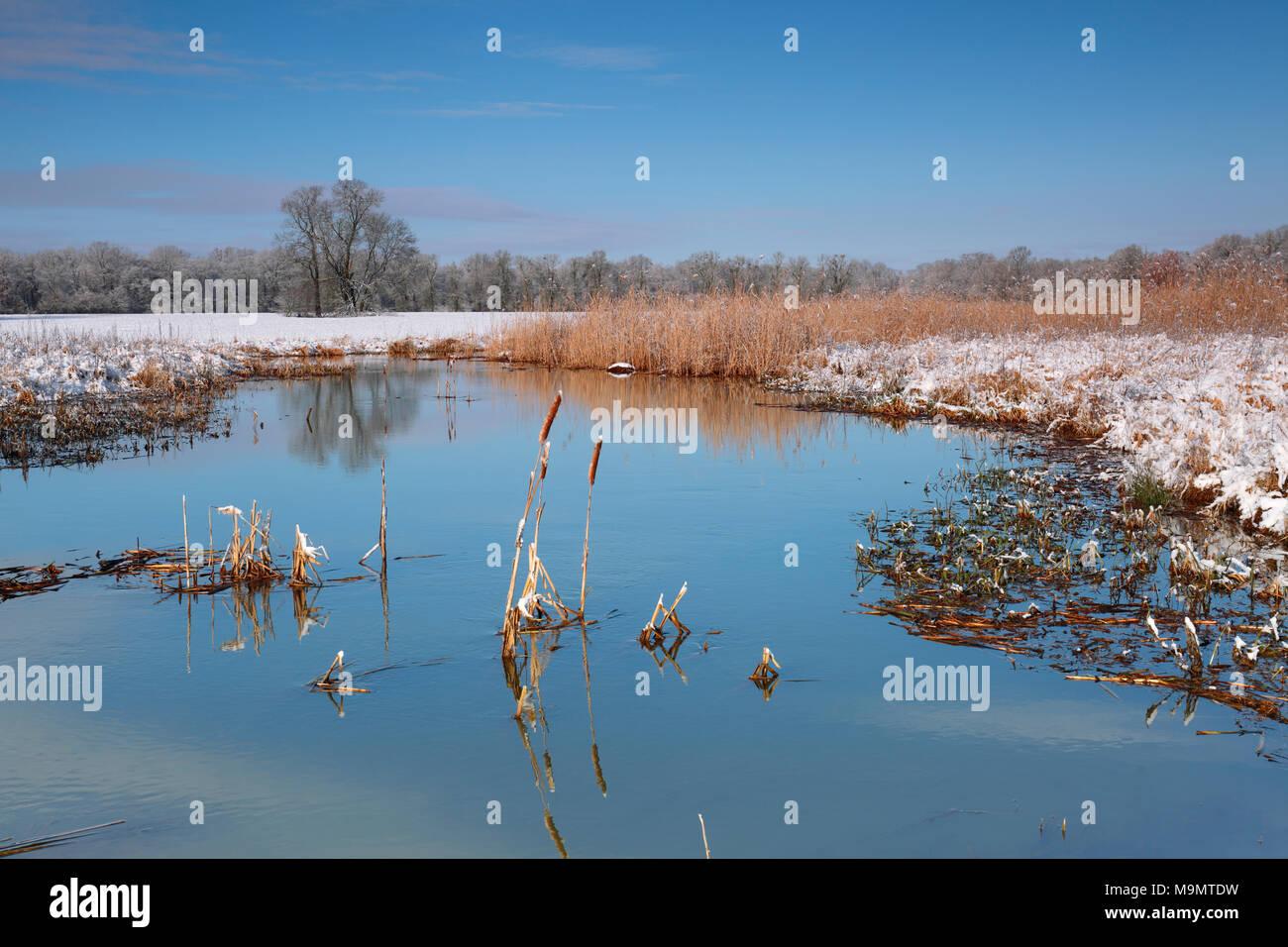 Wetland landscape in winter, Biosphere Reserve Middle Elbe, Dessau-Roßlau, Saxony-Anhalt, Germany - Stock Image