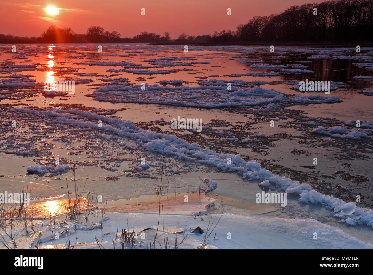 Ice run, small ice floes on the Elbe at sunset, Biosphere Reserve Middle Elbe, Dessau-Roßlau, Saxony-Anhalt, Germany - Stock Image