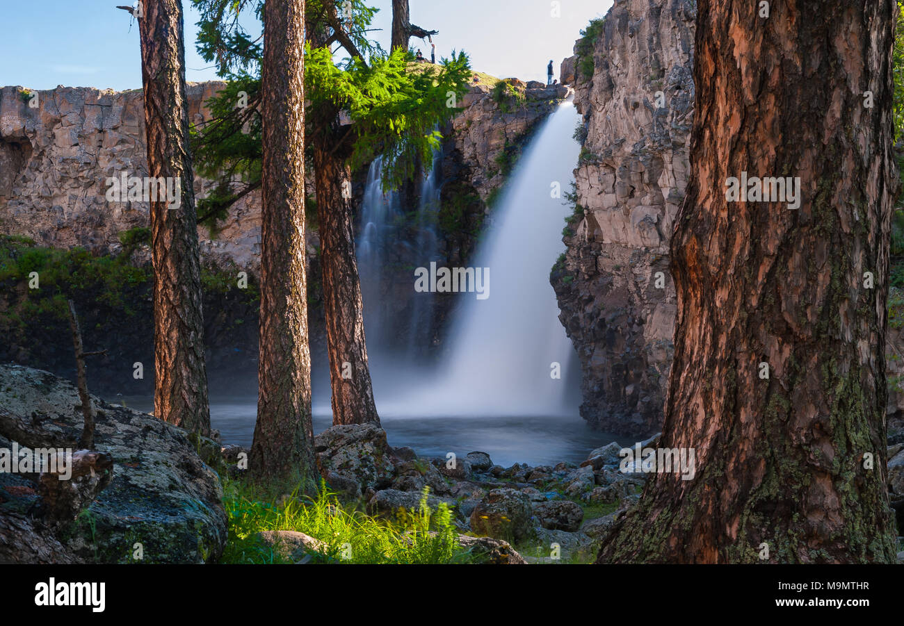 Tree trunks with Orkhon waterfalls in the back, Mongolia - Stock Image