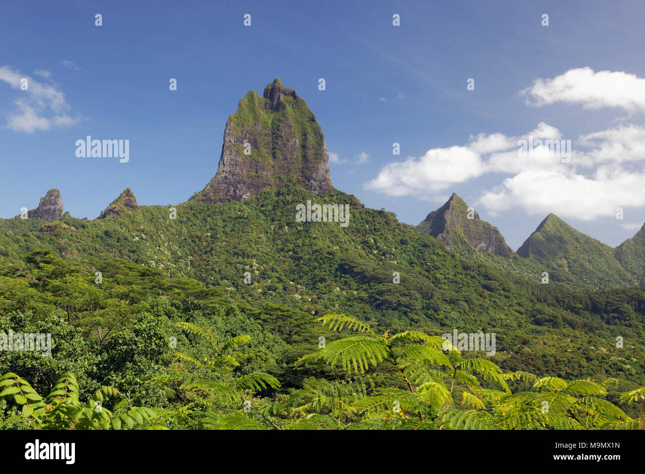 View from Belvedere vantage point, green mountain range with green vegetation and highest point Mont Tohiea, 1207 m, Moorea - Stock Image