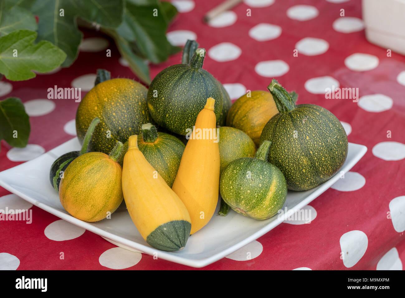Summer Squash, Prydnadspumpa (Cucurbita pepo) - Stock Image