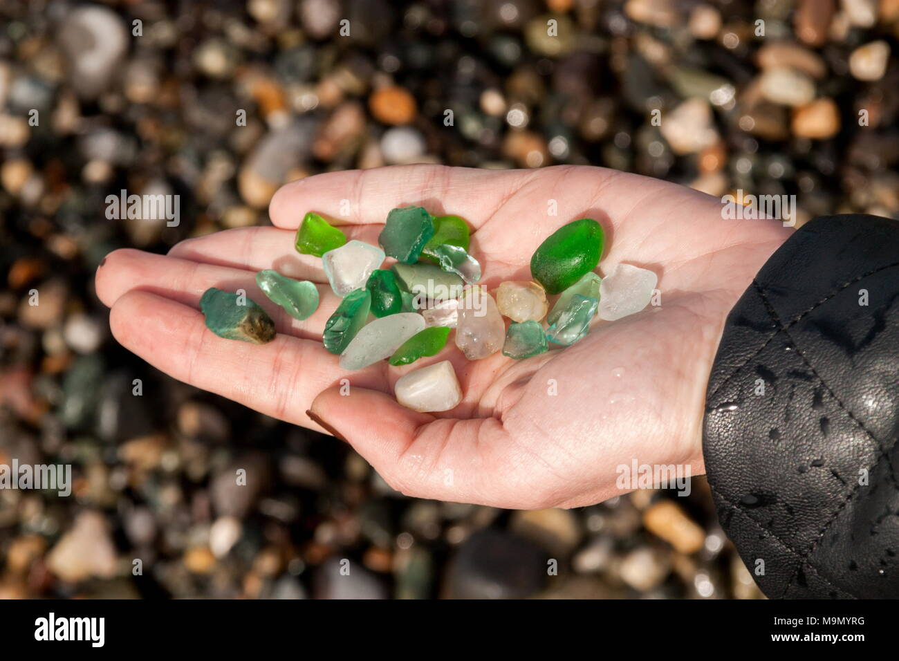 Woman picking sea finds on shore Stock Photo