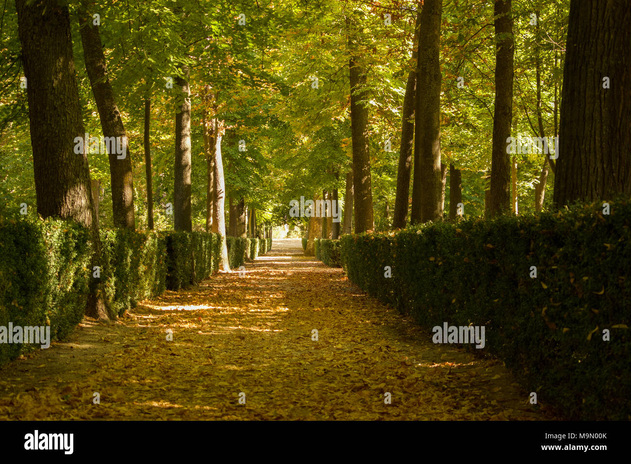 View down an untouched pathway covered in fallen autumn leaves in the wooded gardens of the Palace of Aranjuez, Spain Stock Photo