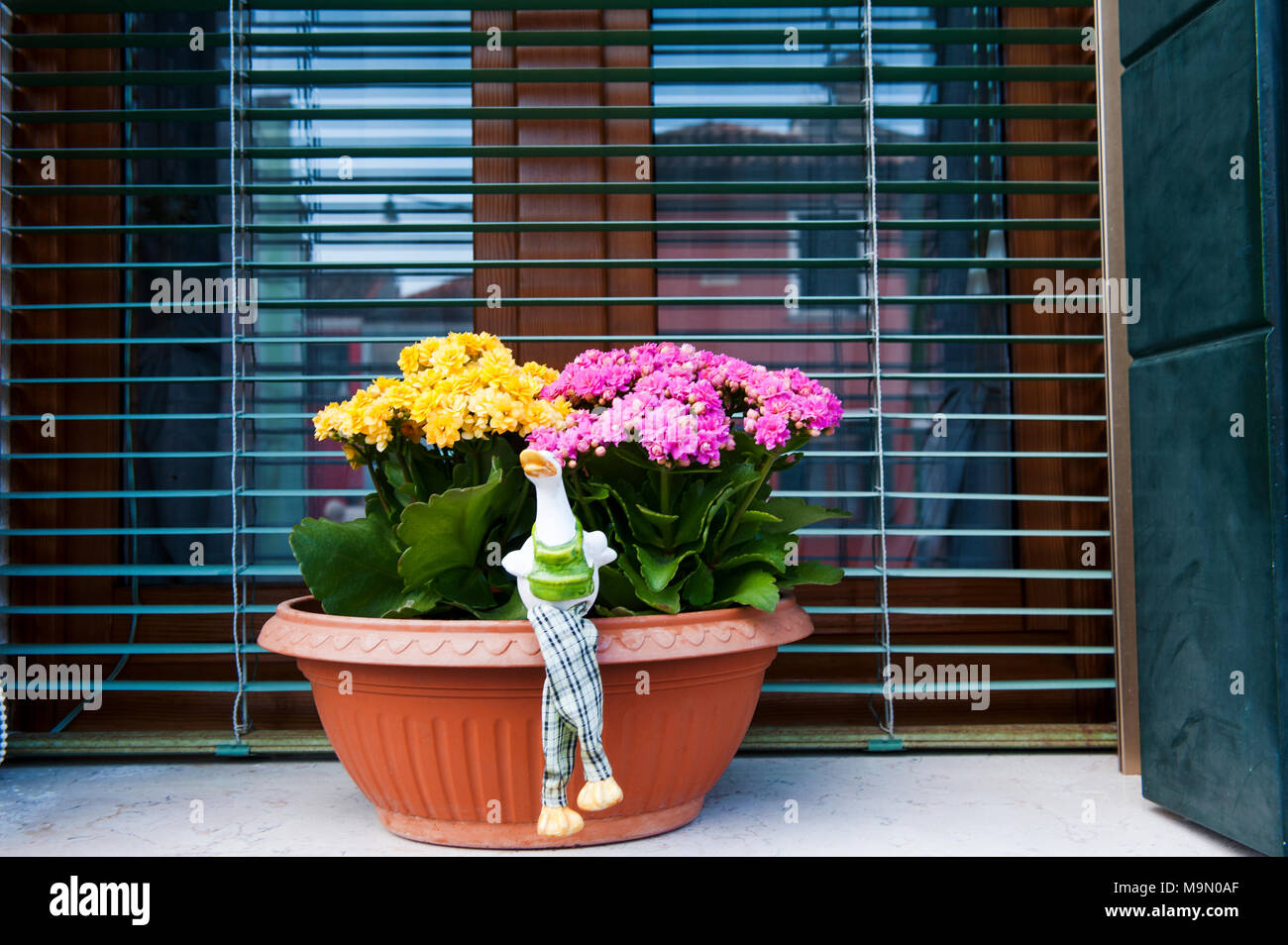 A decorative plant on the windowsill of a house in Burano, Venice - Stock Image