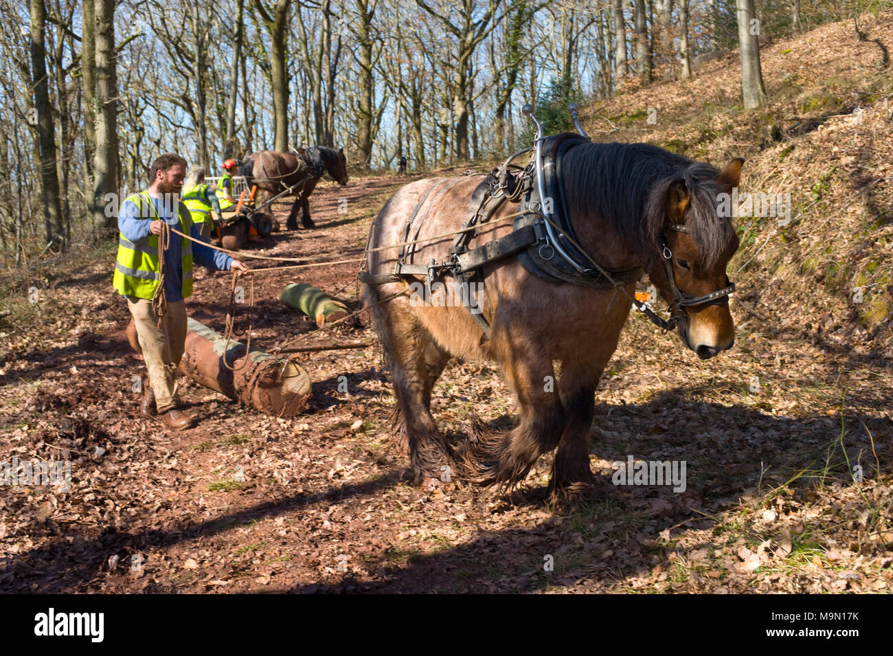 Horse Logging High Resolution Stock Photography And Images Alamy