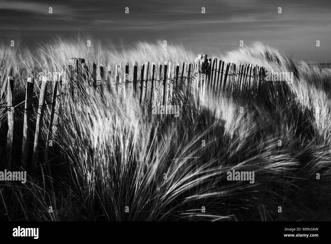 Sand Dunes at Greatstone Beach. South East England. - Stock Image