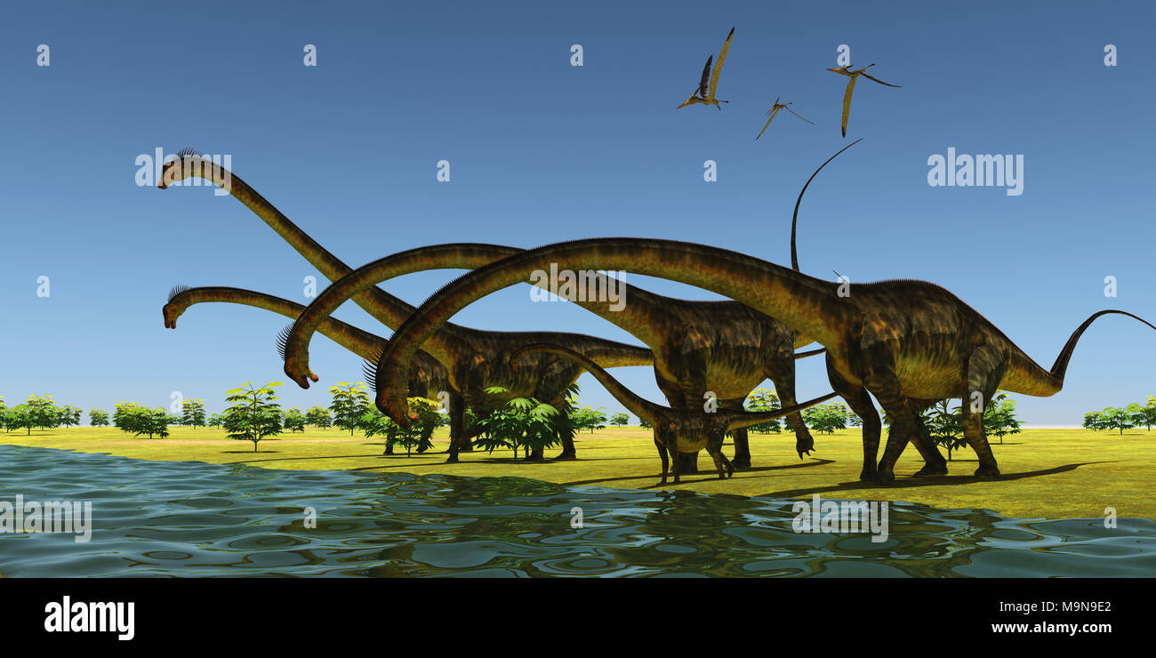 Jurassic Barosaurus Dinosaurs - A herd of Barosaurus dinosaurs bend their long necks to drink from a river as a flock of Pteranodons fly over. Stock Photo
