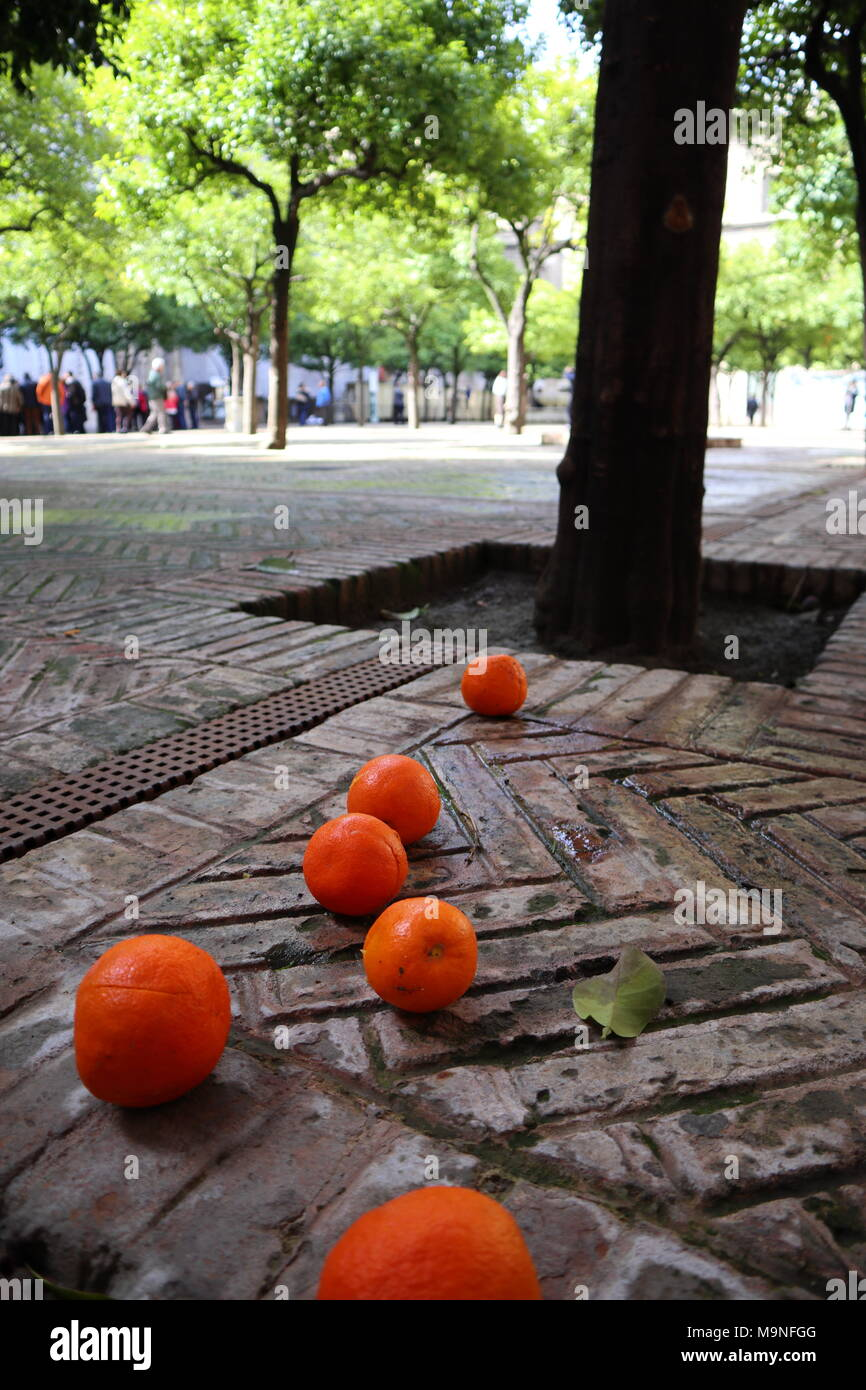 Ripe oranges on a paved ground, in the courtyard of the cathedral in Seville, Spain - Stock Image