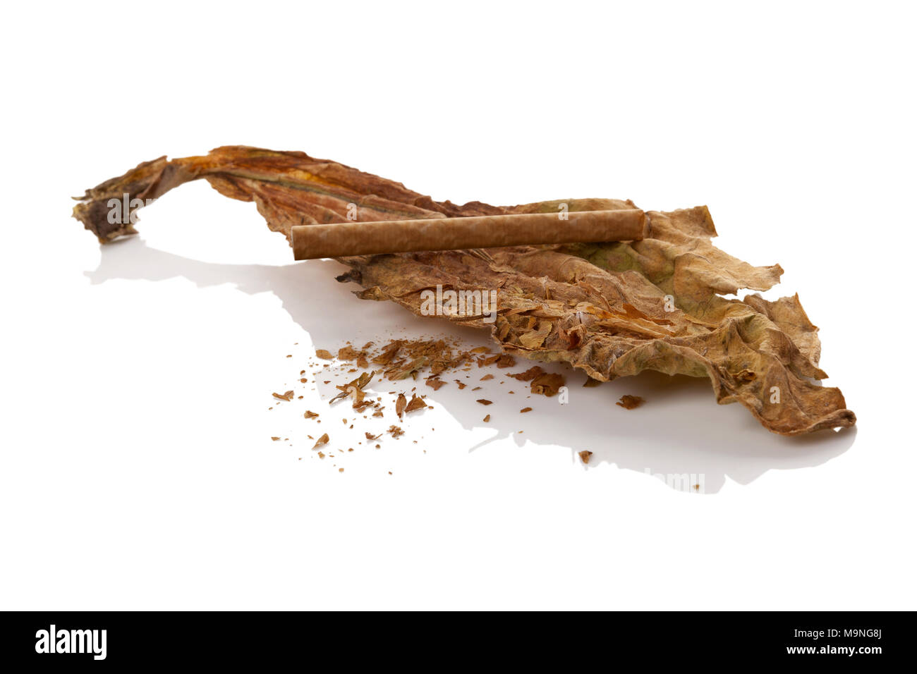 Dried tobacco leaves with cigarette isolated on white background. Nicotine addiction. - Stock Image