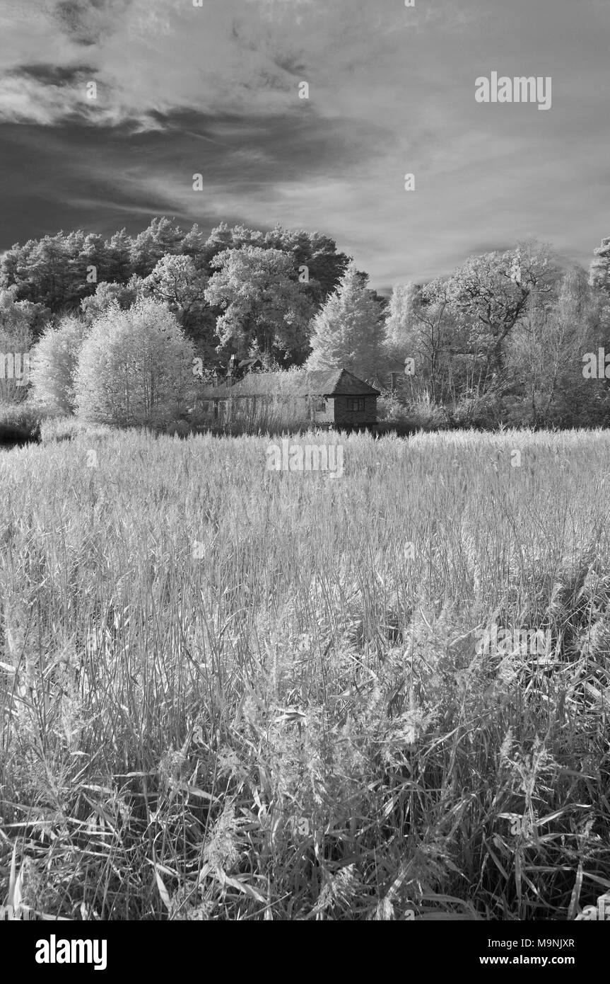 Infrared view across the grasses and trees of Frensham Little pond in the Surrey Hills AONB, England, UK. - Stock Image