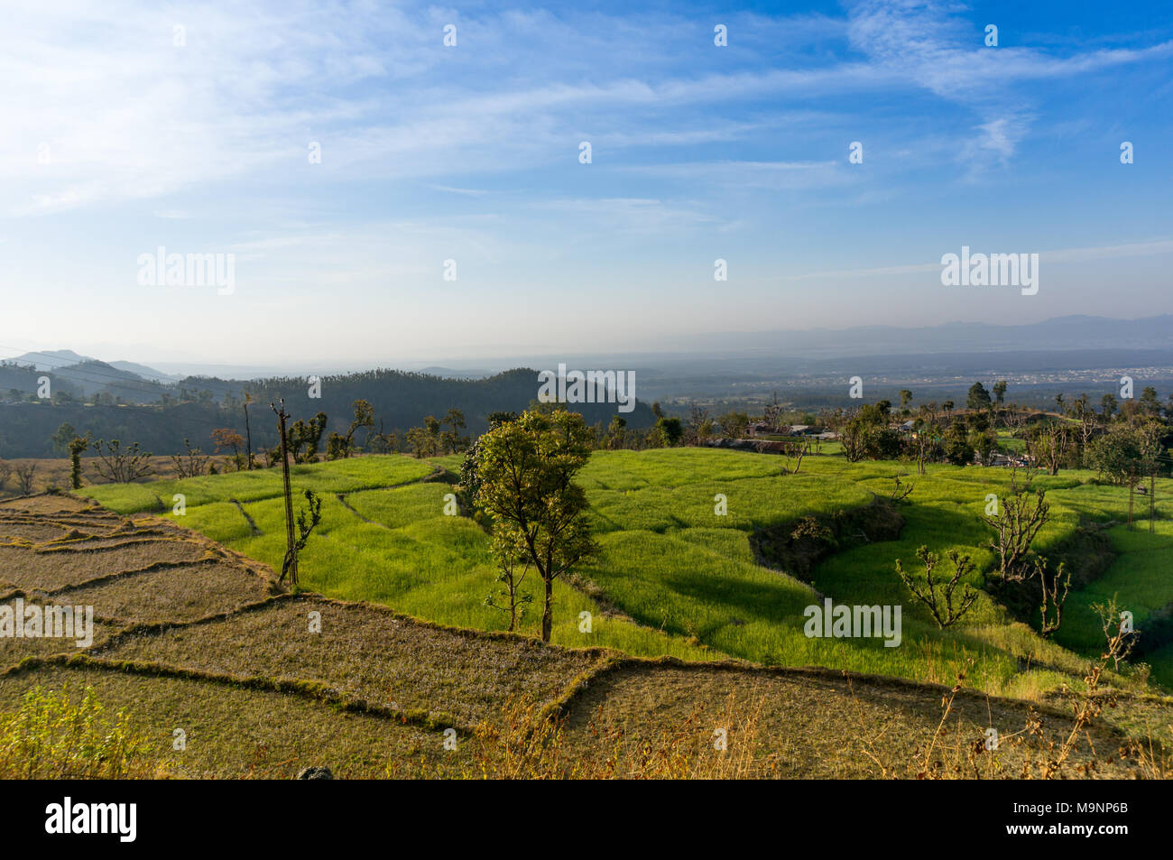 Step farm with wheat and barren patches shot in Dehra dun india. The city in the background and the beautiful blue sky add to why this place is so popular with tourists - Stock Image