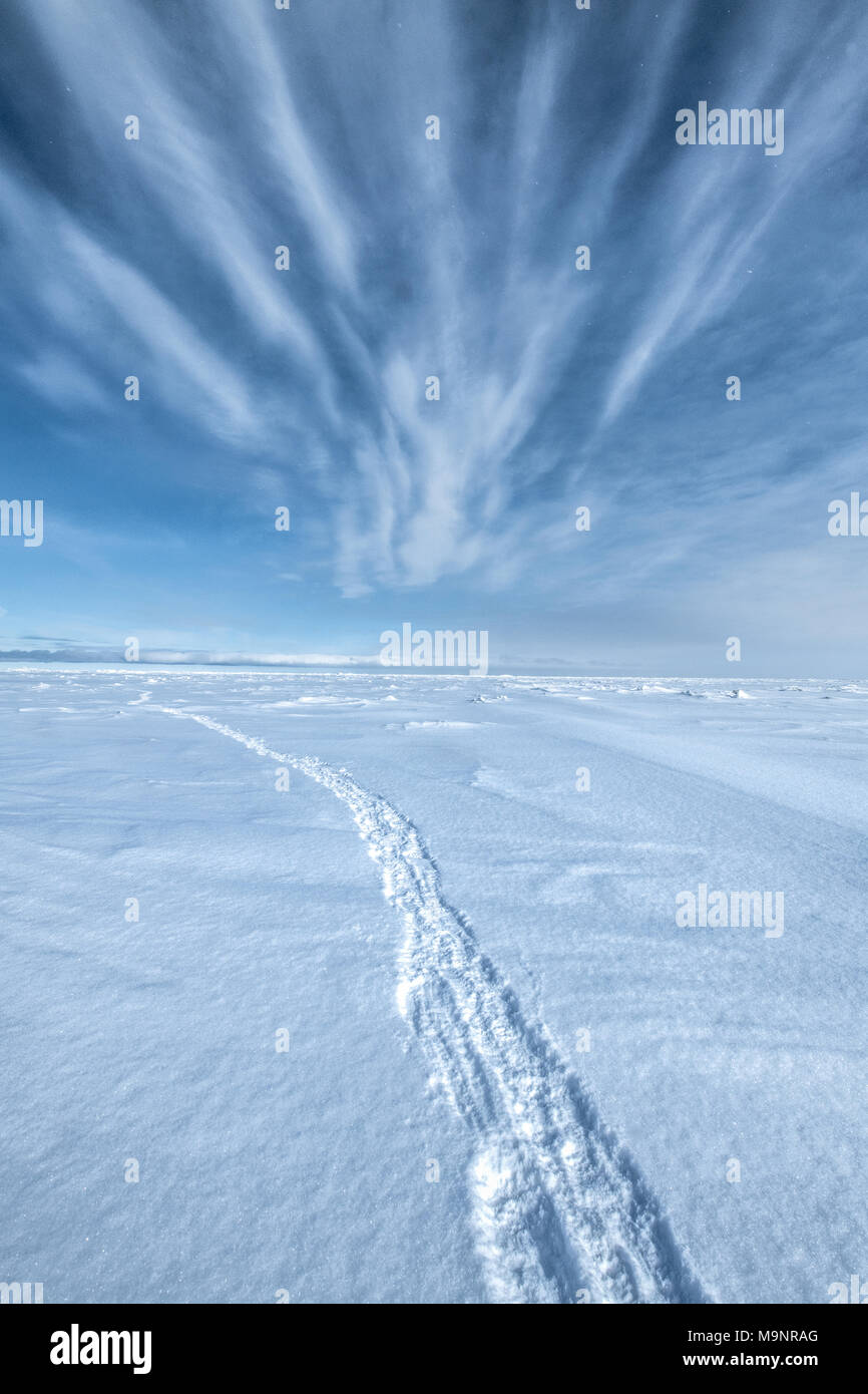 Tracks of Polar Bear and two cubs making way to sea ice from den - Stock Image