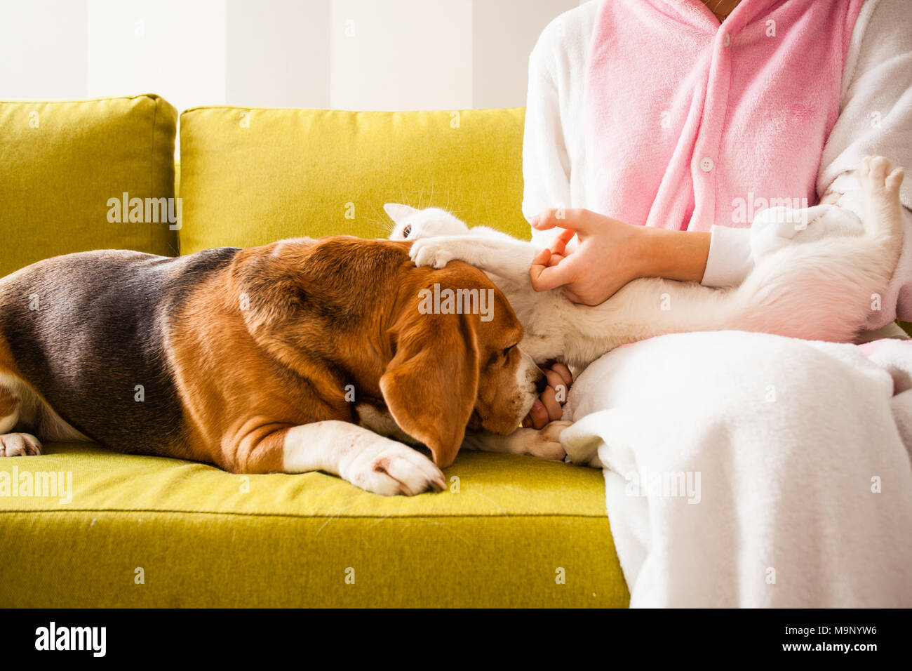 the cat likes this dog - Stock Image