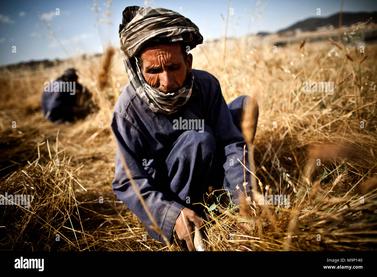 Afghan farmers work in the wheat fields in Paghman district, Kabul, Afghanistan, Wednesday, July 22, 2009. - Stock Image