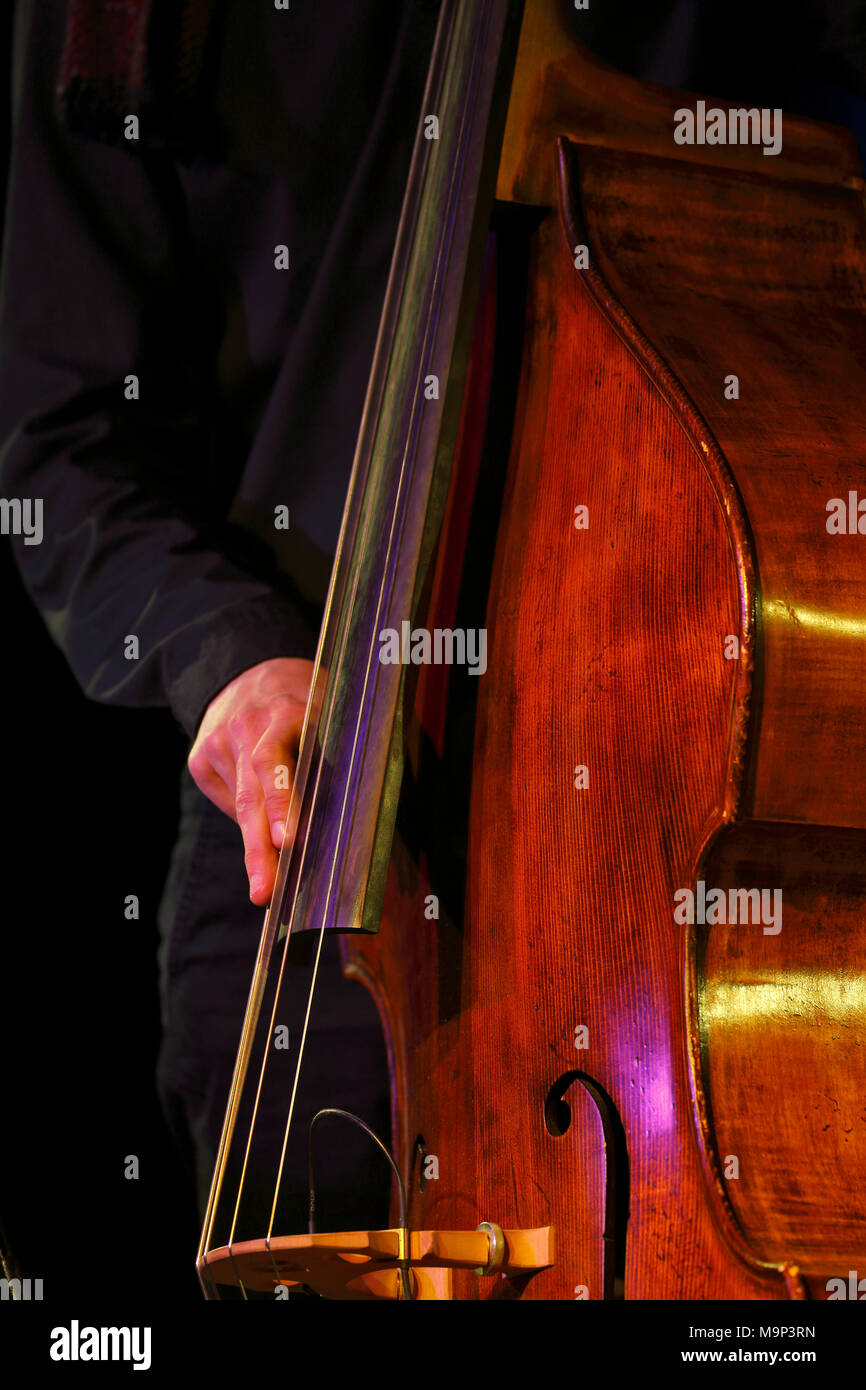 Conrad Steinhoff of the Gerold Heitbaum Quartet plucking on contrabass, Wittenberg, Saxony-Anhalt, Germany - Stock Image