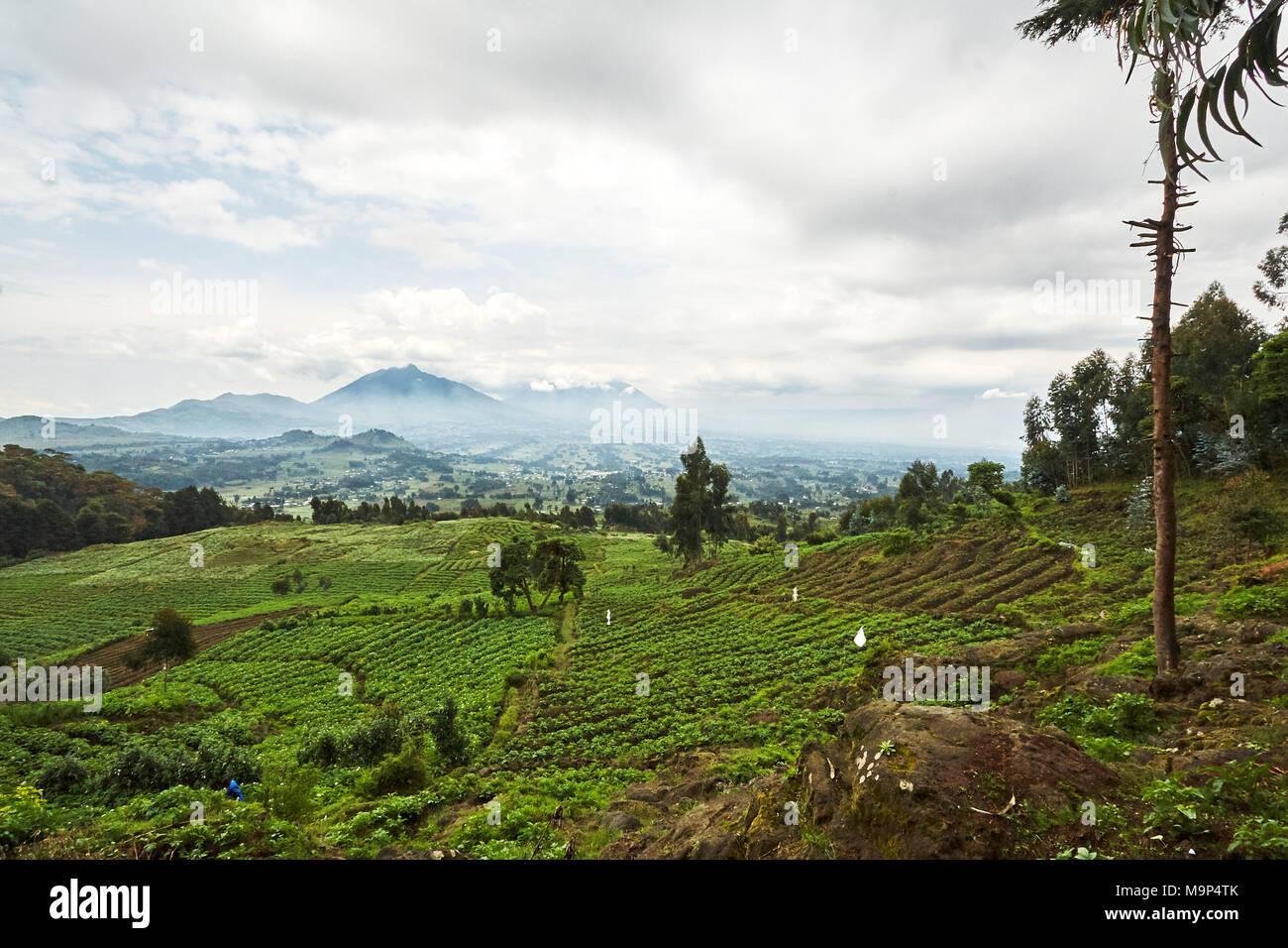Green Landscape view in Virunga reserve, Rwanda Stock Photo