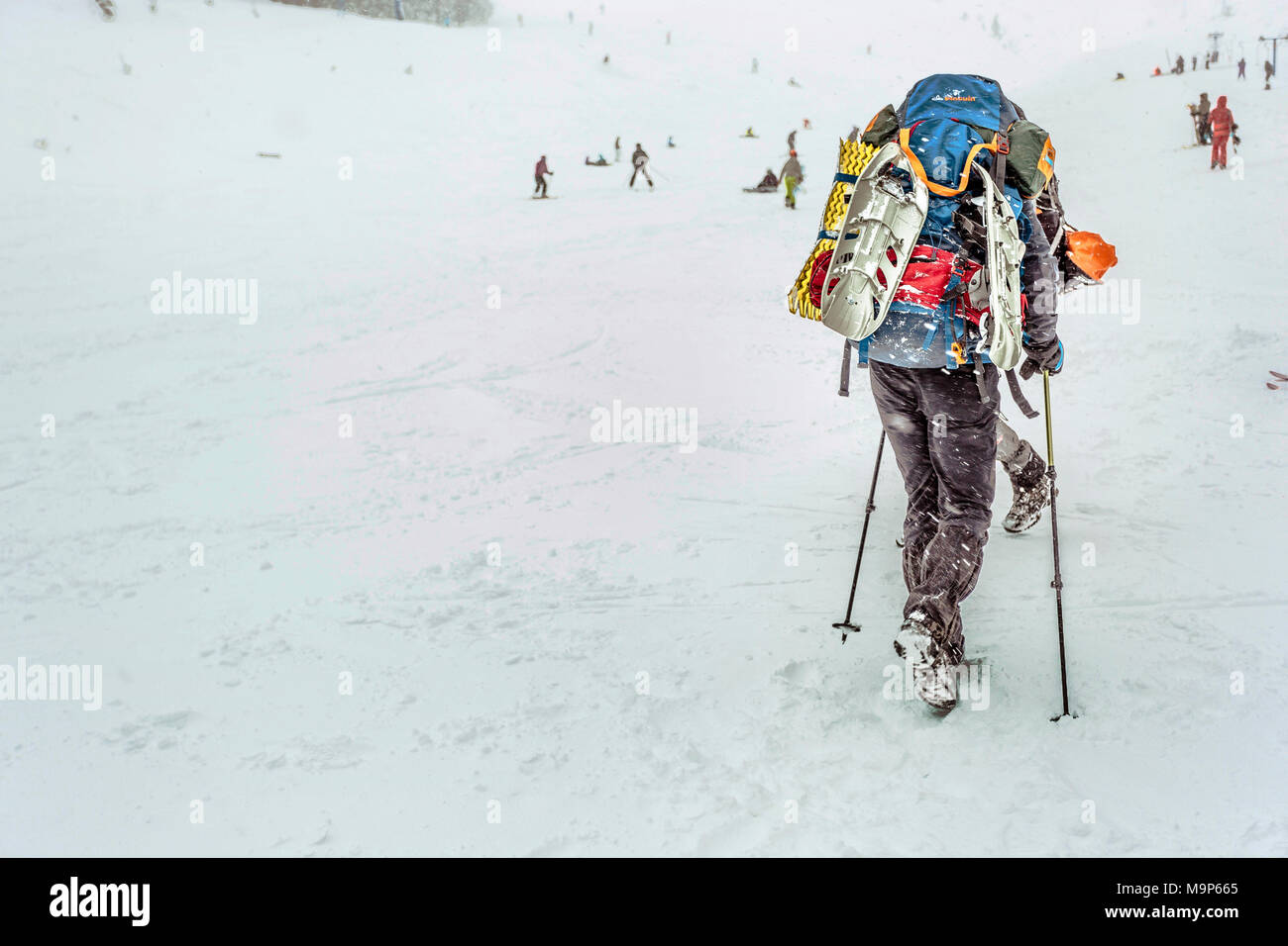 Rear view of man with heavy skiing equipment in snow at Dragobrat Mountains, Ukraine - Stock Image