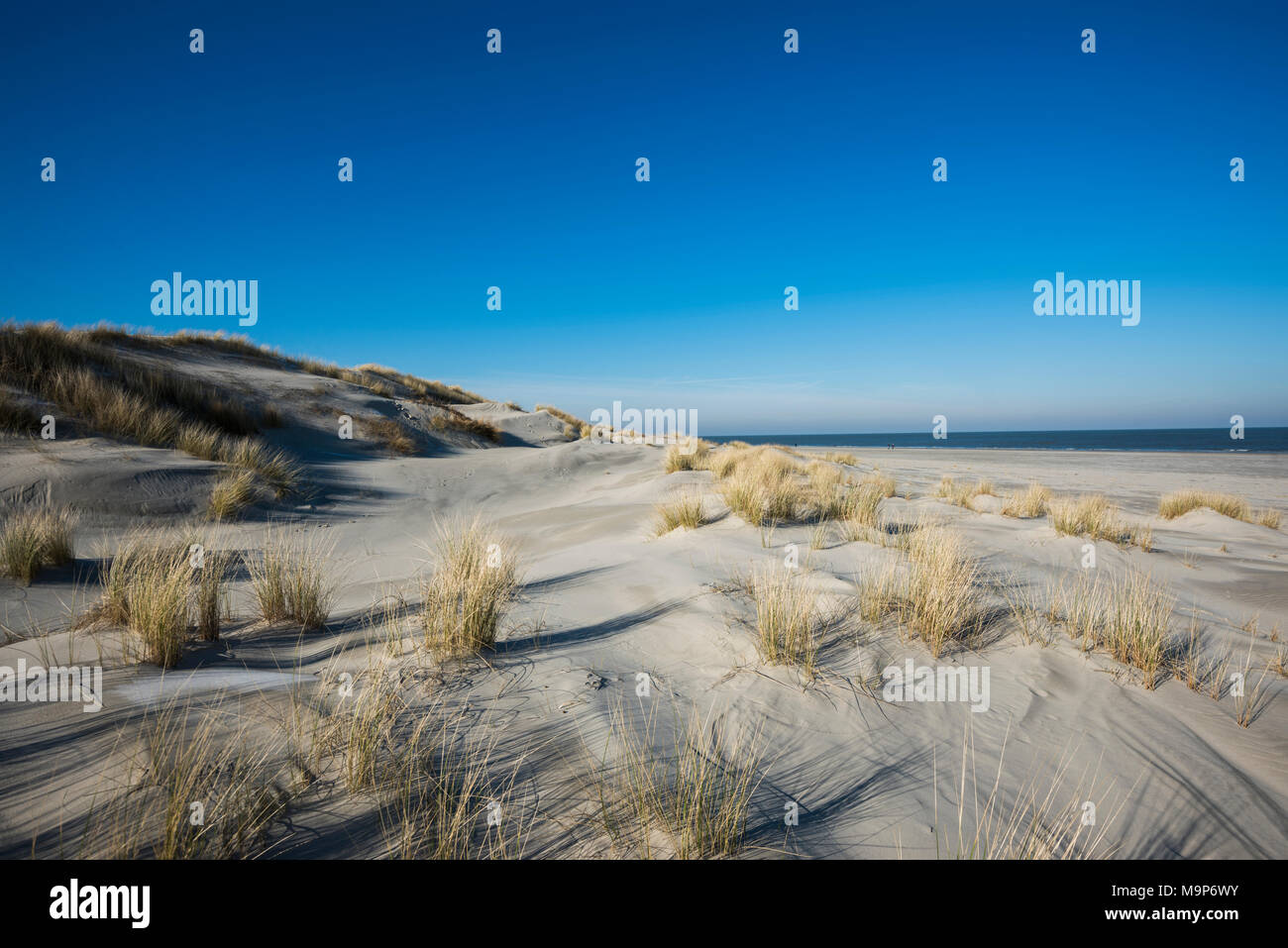 Dunes and blue skies off the North Sea, Spiekeroog, East Frisian Islands, East Frisia, Lower Saxony, Germany - Stock Image