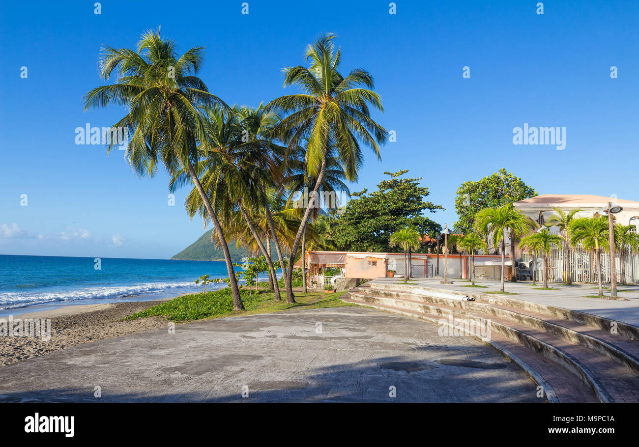 The palm trees on Caribbean beach, Martinique island. - Stock Image