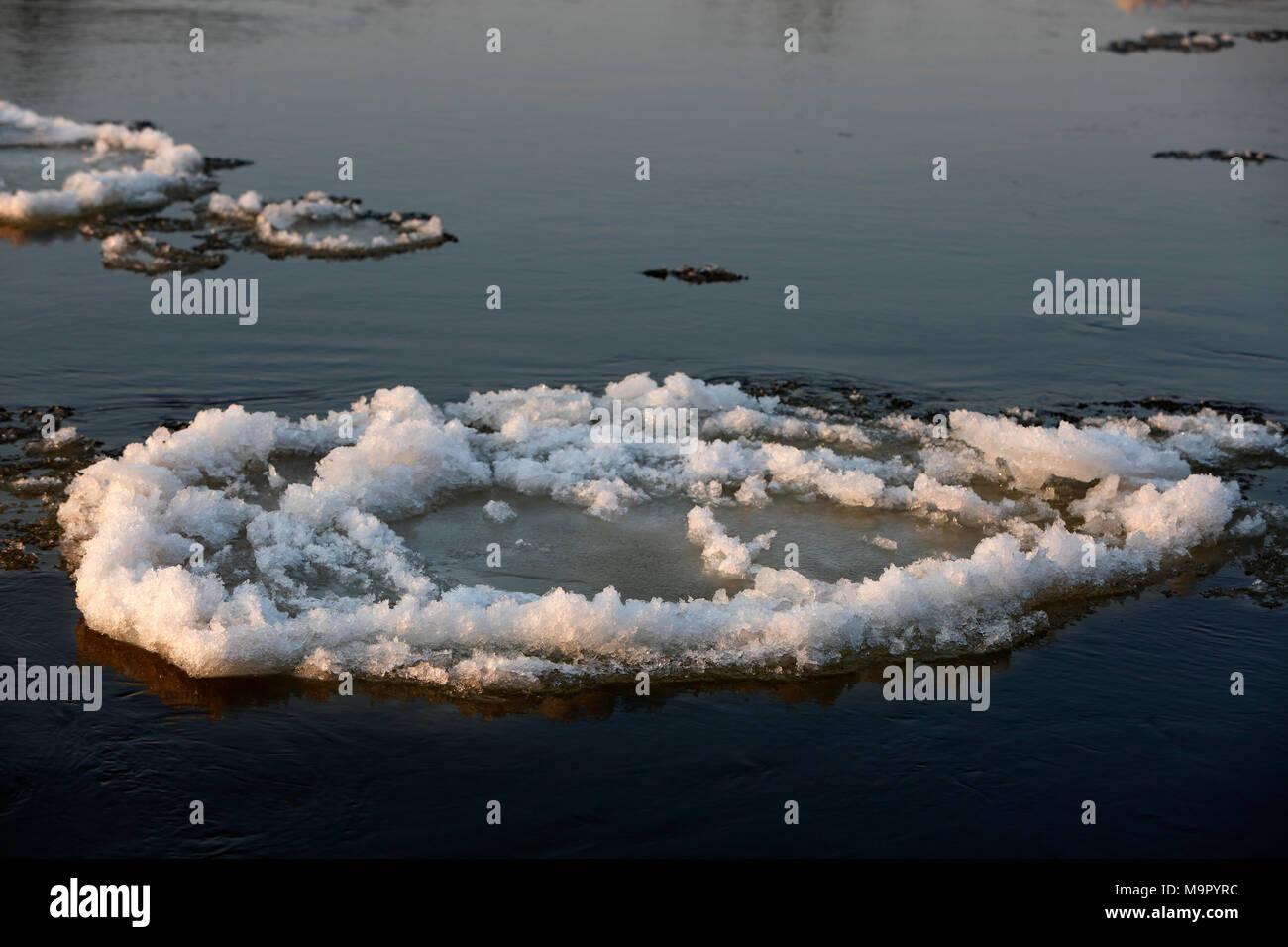 Ice floe, ice floe on the Elbe, Biosphere Reserve Middle Elbe, Dessau-Roßlau, Saxony-Anhalt, Germany - Stock Image