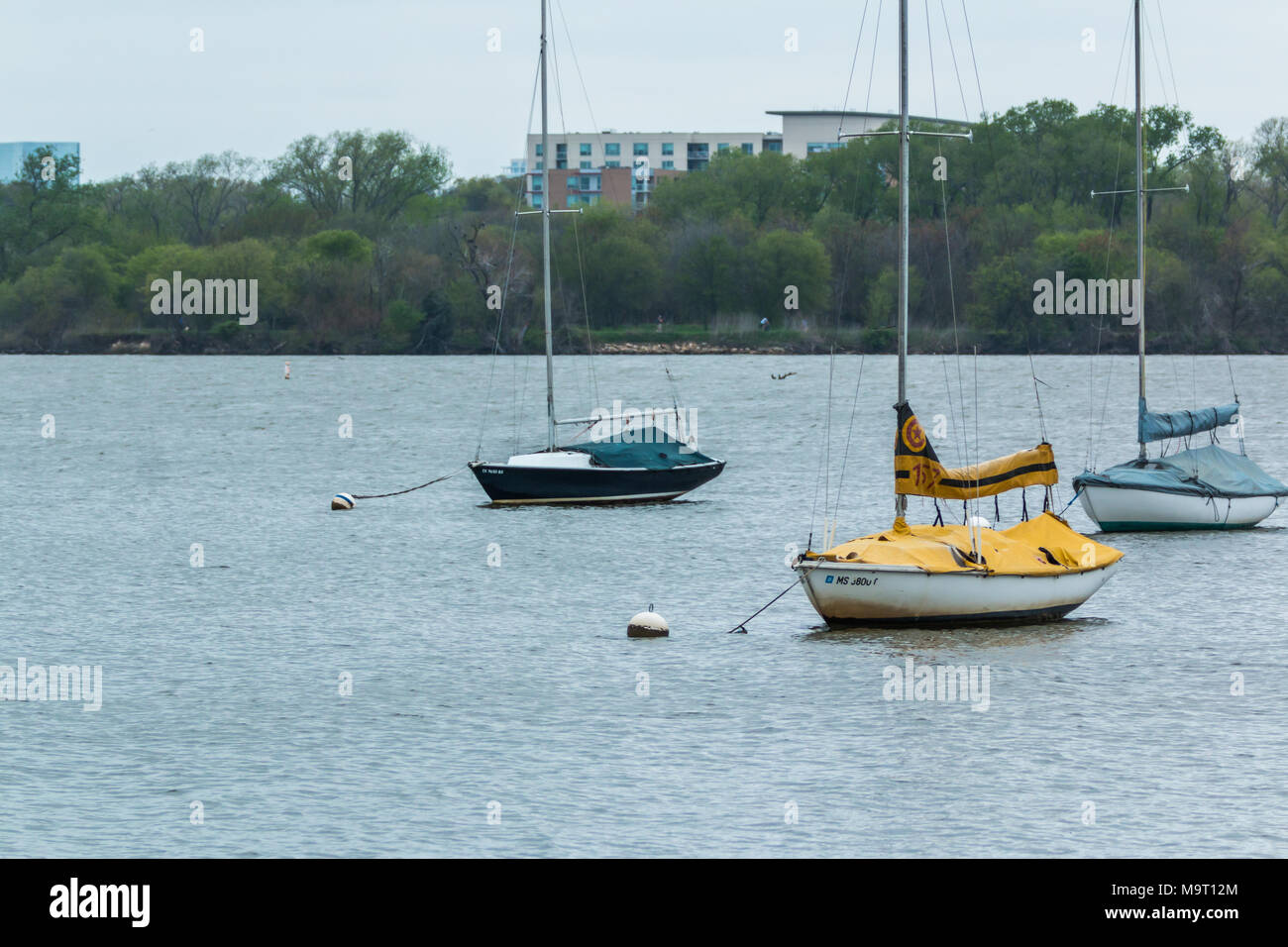 Yellow sailboat on White Rock Lake at Dallas Texas - Stock Image