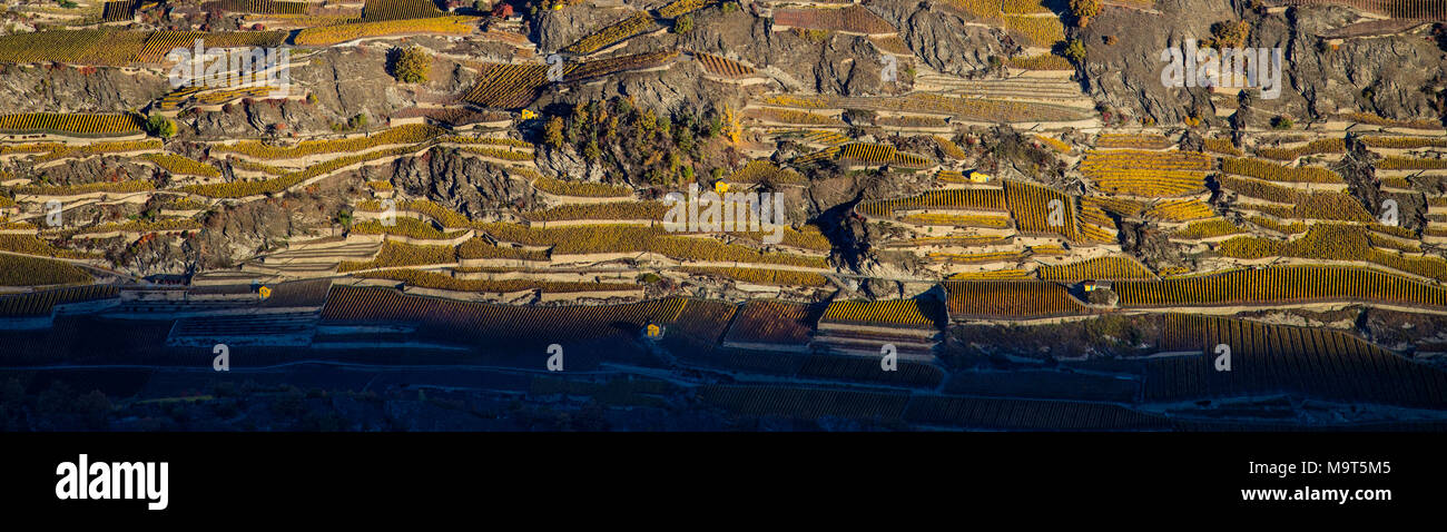 Aerial landscape of the north side of the Rhone River, showing vineyards in the Valais kanton (Wallis) near the city of Sion in an autumn sunrise, Swi - Stock Image