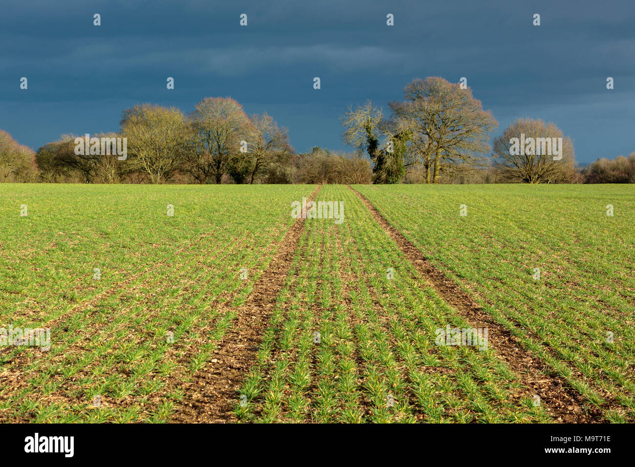 Farm fields in the Chiltern Hills, Oxfordshire, England UK in autumn light - Stock Image