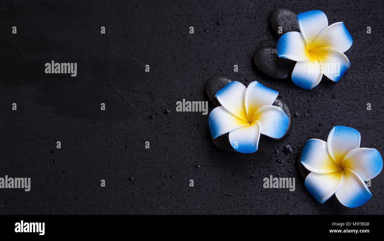 Spa still life setting with frangipani flowers and massages tones, top view Stock Photo