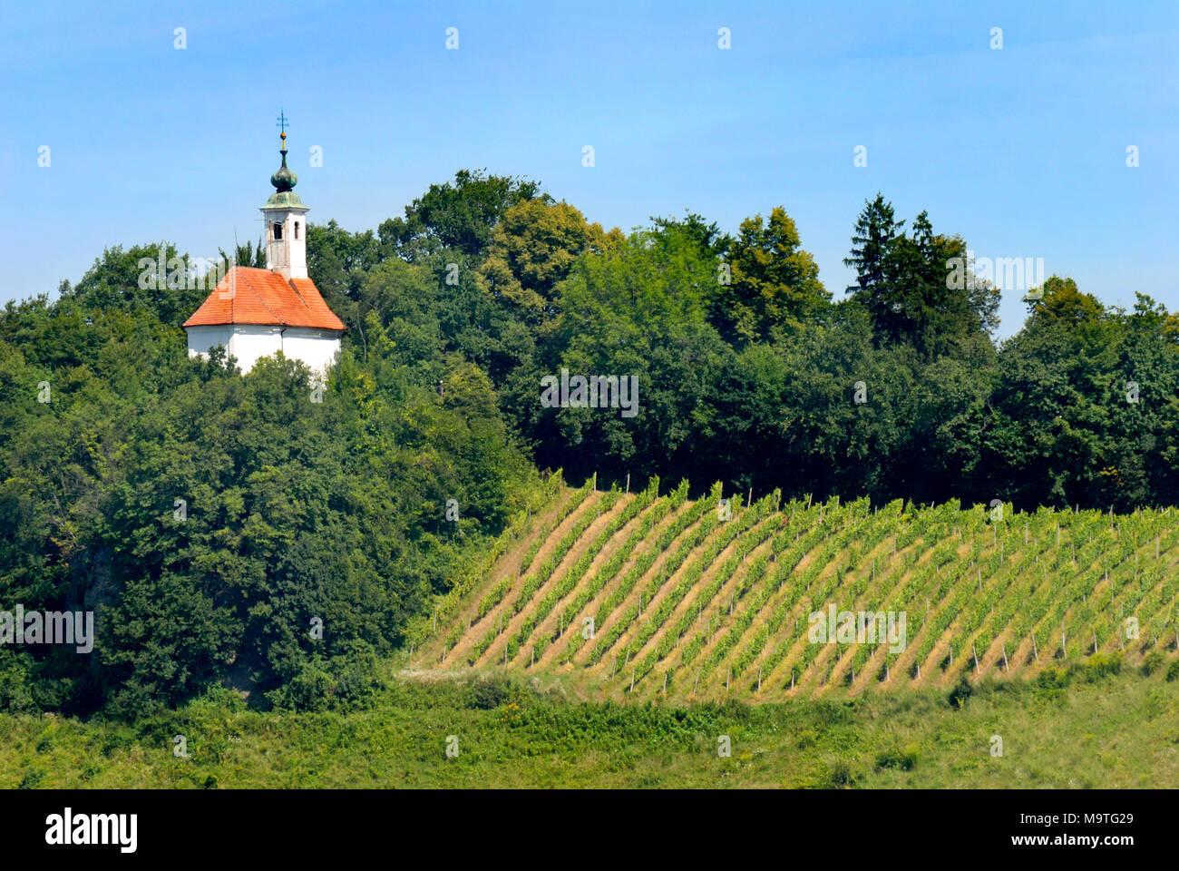 Maribor, Stajerska, Slovenia. Kalvaria, Church of St Barbara (Za Kalvarijo: 1681) and vineyard seen from top of Cathedral tower - Stock Image